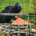 2013 07 31 Ipswich Explosives Incident